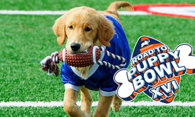 Can You Really Bet on the Puppy Bowl This Year?